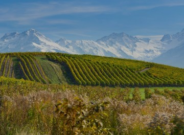 Wine Tour France Alps